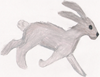 Cave Painted Hare